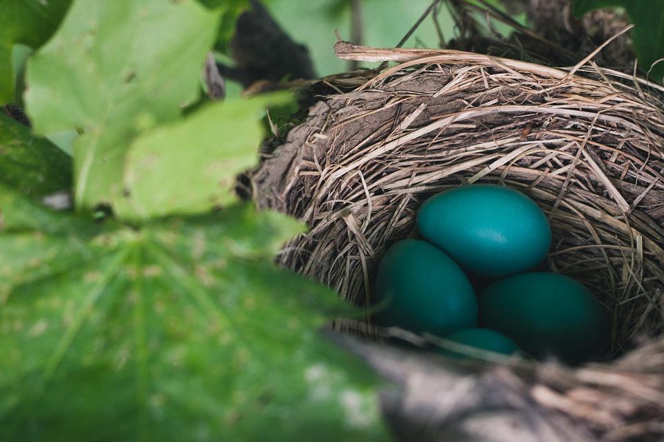 nest-843231_960_720.jpg